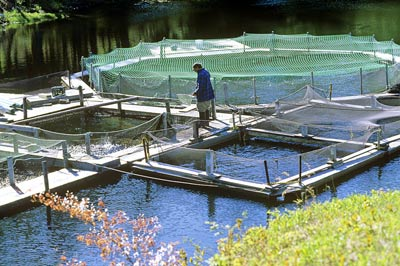 Solutions to Smart Fishpond